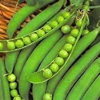 PlenTree 200 guisante Semillas Semillas Lincoln no modificada genéticamente de la herencia Nueva semilla para 2017