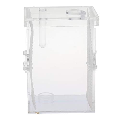 SM SunniMix Terrarium für Reptilien/Insekten, Transparent - L