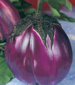 Premier Seeds Direct AUB04 - Semillas para verduras (berenjena)