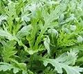 Just Seed Saatgut, Kronenwucherblume/ Chrysanthemum coronarium, 1.000 Samen von Just Seed bei Du und dein Garten