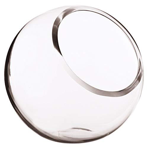 Pinzhi d/ôme en verre transparent Cloche Fleur Affichage Pot Vase avec base en bois