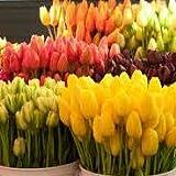 Ramo 20 Tulipanes Naturales Variados para Regalar. PORTES GRATIS