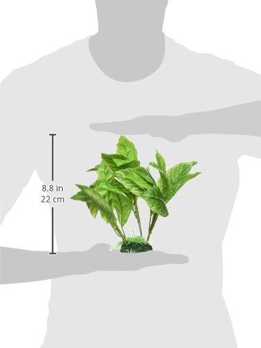 Fluval Yellow Stripe Spathiphyllum Plant for Aquarium, 9-Inch 3