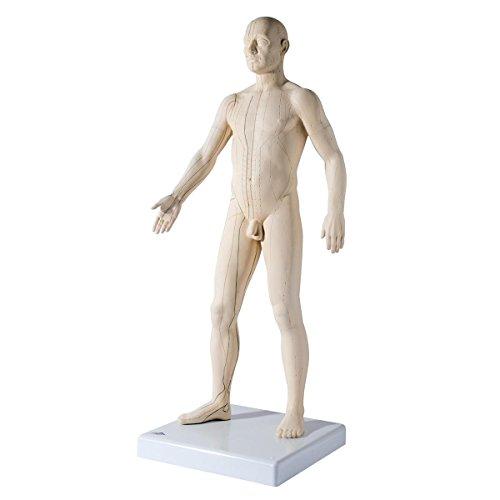 3B Scientific Akupunktur-Figur, männlich