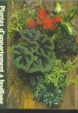 Plantes d'appartement à feuillage