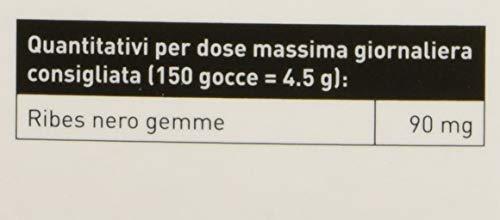 Erba Vita Gemmoderivato Ribes Nero - 50 ml