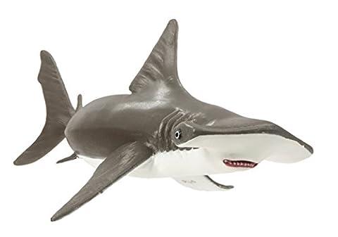 Baby Hammerhead Shark