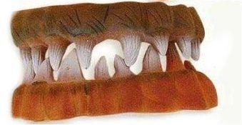 Edel Scherz-Gebiss - Zähne wie beim Wolf / Werewolf