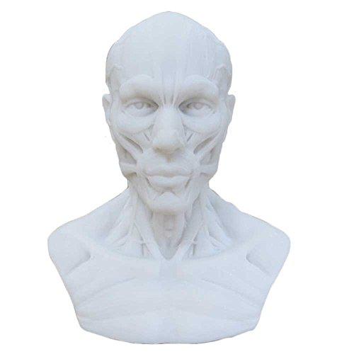 earlywish-anatomia-10-cm-modello-teschio-muscolare-bone-medical-da-disegno-studio