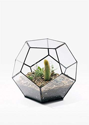 MINGZE Pflanzen-Terrarium, Transparentes fünfeckiges Dodekaeder Glas, für Sukkulenten Farn Moos Luftpflanzen Mini-Garten Ewige Blume dekoratives Geschenk (11 * 11 * 9CM, Schwarz)