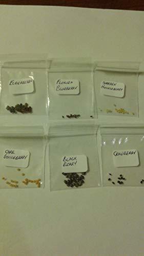 Keimfutter: Verschiedene Berry Seed Packets Frische Dieser Saison Ernte von My Garden -