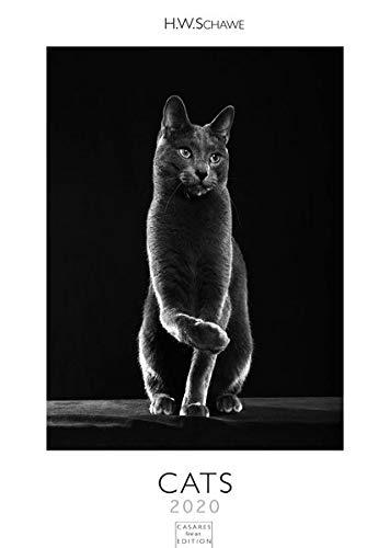 Cats L 2020 42x59cm