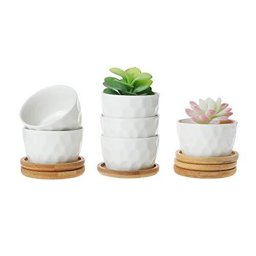 T4U 8CM Keramik Weiß Tüpfelchen Design Sukkulenten Töpfe Kaktus Pflanze Töpfe Mini Blumentöpfe mit Bambus-Untersetzer, 6er Set