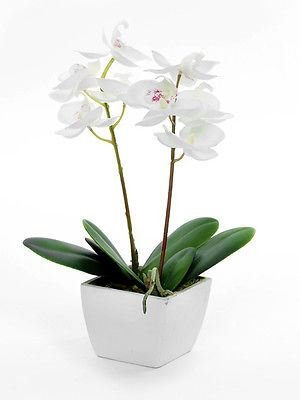 silk-artificial-potted-cream-orchid-plant-mothers-day-valentines-wedding-dec