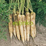 100pcs / lot Carotte Graines White Satin Carotte Graines Légumes bricolage Daucus Carota jardin Bonsai Usine