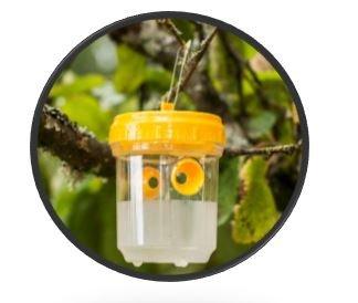 PCP, The Vespa Velutina monitoring trap - Asian hornet trap 2 x traps 3