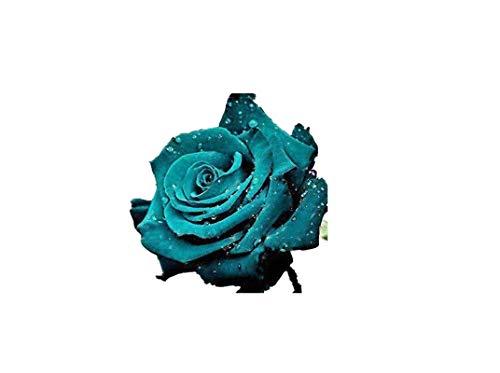 KINGDUO 100 Pcs Rose Rares Graines Mélangées Couleur Maison Jardin En Pot De Fleurs Graines Décoration Bonsai-5