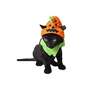 Wall-of-Dragon-Hot-Halloween-Pet-Supplies-Factory-Spooky-Halloween-Dog-Hat-Halloween-Cat-Ornaments-Trick-Or-Pumpkin-Hat1pcs