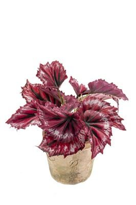 artplants Künstliche Blattbegonie Benita im Tontopf, 12 Blätter, rot, 22 cm - Kunst Schiefblatt/Deko Begonien