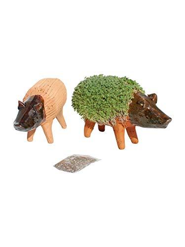 Lassen Sie Ihr eigenes KresseSchwein gedeihen (Inklusive Kressesamen). Fair gehandelt. Handarbeit aus Mexiko. Schwein.
