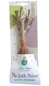 2 jeunes baobab de 2 ans - Petit Prince +