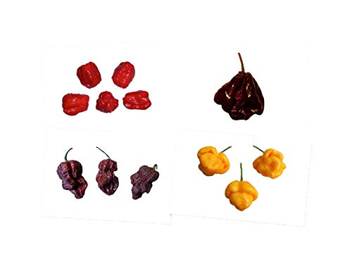7 Pot Chili Mix (4 Sorten) Ultrascharfe Super Hot Chilis