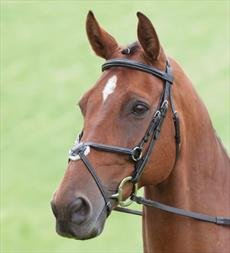 Salisbury Brackley Brida para caballo muserola cruzada Negro negro Talla:Cob