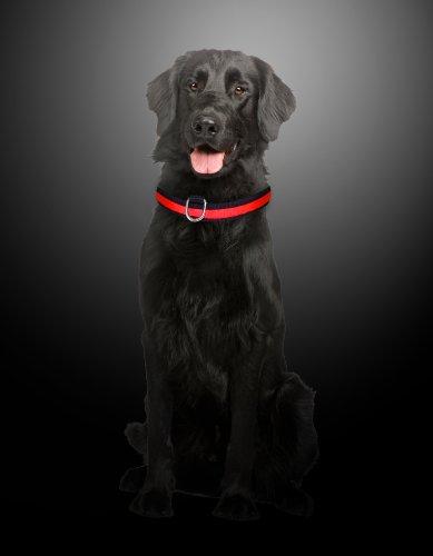 """LED Halsband Hundehalsband """"Zandoo"""" Leuchthalsband für Hunde in der Farbe rot Größe S (35-40 cm) NEU von der Marke PRECORN - 4"""