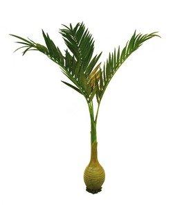 EUROPALMS Phönixpalme mit Knollenstamm, 300cm Kunstpflanze
