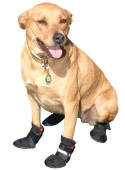 hausschuhe-komfort-displayschutzfolien-fur-kleine-hunde