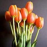 Ramo 20 Tulipanes Naturales Naranja para Regalar. PORTES GRATIS