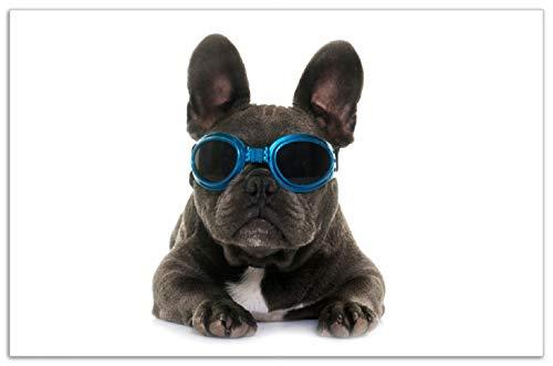Wallario Herdabdeckplatte/Spritzschutz aus Glas, 1-teilig, 80x52cm, für Ceran- und Induktionsherde, Motiv Cooler Hund mit Sonnenbrille in blau - Französische Bulldogge