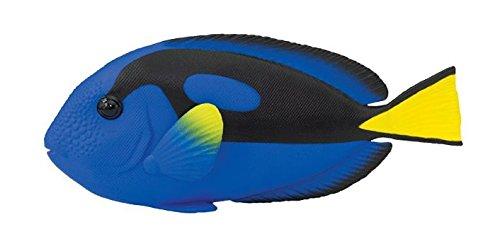 Fisch Chirurg (Safari 100039–Fisch Chirurg)
