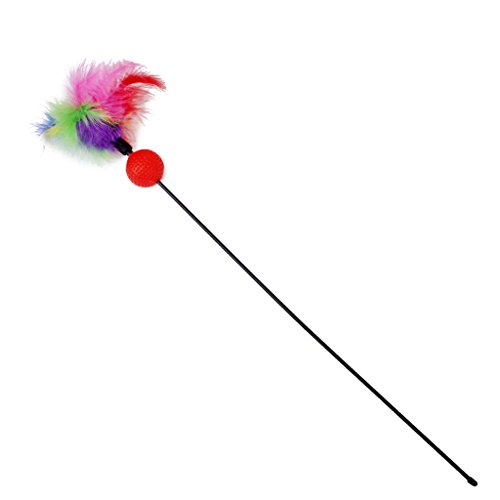 Bunt Harte Nuss Feder Katze Federspielzeug Stab Angeseilt Haustier Spielzeug mit Laterne zufällige Farbe