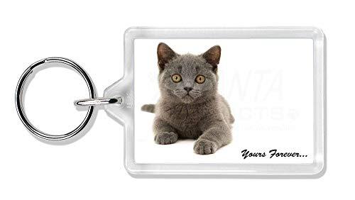 Advanta - Keyrings Silver Blue Cat ' Yours Forever' Foto Schlüsselbund TierstrumpffüllerGeschenk