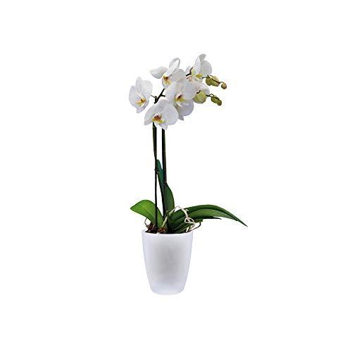 elho Brussels Orchid High Vaso di Fiori, Bianco, 12.7x12.7x15.2 cm