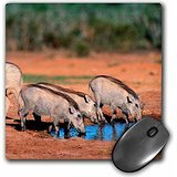 Danita Delimont - Warthogs - Warthogs at waterhole, Addo Elephant NP, Eastern Cape, South Africa. - MousePad (mp_209072_1)