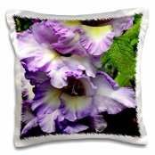 ET Photography Roses - A beautiful pink garden rose with petals like a fancy dress - 16x16 inch Pillow Case