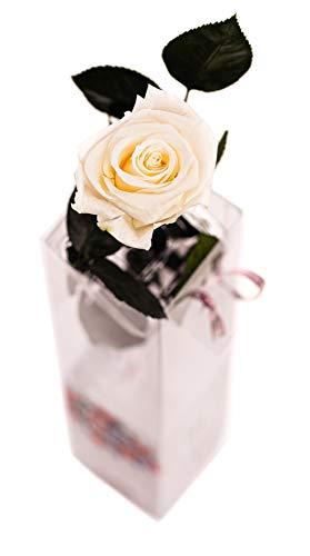 Rosen-Te-Amo - Haltbare echte weiße Blume mit herunterladbarer Grußkarte; Infinity Rosen - Deko und Geschenk zum Muttertag - neue verstärkte Verpackung