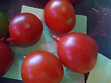 Farmerly Beautiful 20 Seeds of Riesentraube Heirloom Tomato