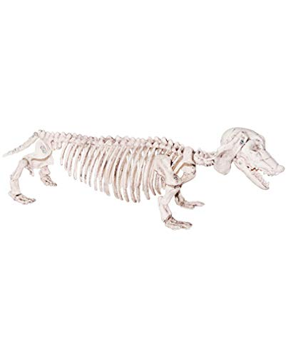 Horror-Shop Kunststoff Dackel Hundeskelett als Halloween Dekoration