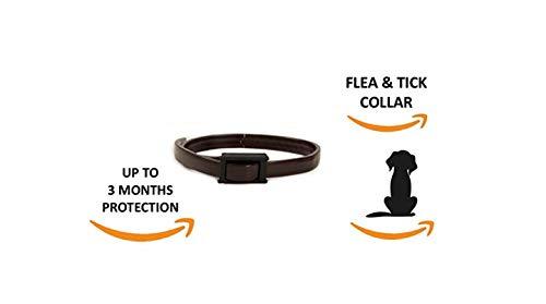 G&P Hunde- und Katzenhalsband