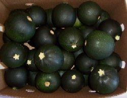 premier-seeds-direct-squ13-squash-little-gem-seeds-pack-of-12
