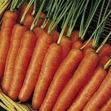 Möhre Früh Nantes 2 - Ca. 6000 Samen - Gemüse
