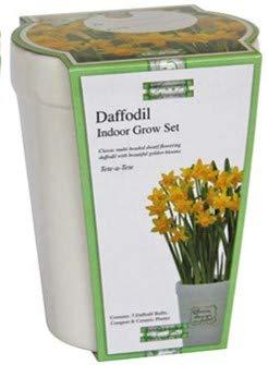 Narciso Grow Tete a Tete Pflanztopf, Keramik, rechteckig, Blumenerde