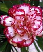 cuatro-estaciones-semilla-de-flor-del-jardn-de-semillas-fciles-de-plantar-y-fcil-de-vivir-paisaje-en