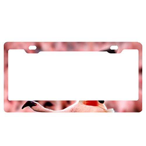 Stainless Steel License Plate Frame Funny Custom Flower Power Party Metal Tag Holder 12 x 6 Inch 2 Packs Iowa State Flower