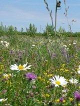 JustSeed Special Flowering Meadow Mix Saatgut, Wildblumen, Mischung für Blumenwiesen, 25 Arten, 4g Samen