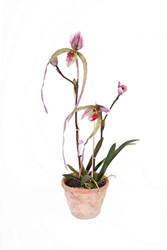 Künstliche Venusschuh Orchidee CORINA im Terracotta Topf, violett-grün, 65 cm -Kunst Blume / Deko Pflanze - artplants