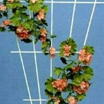 Rosenspalier 51000 150x75 cm grün